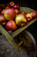 Apples in a wooden wheelbarrow