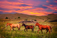 Three Horses on a meadow